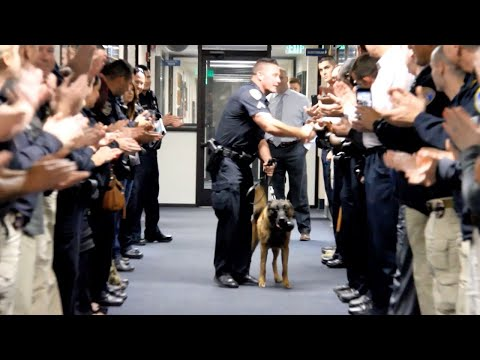 Retired Police Dog Gets Guard Of Honour