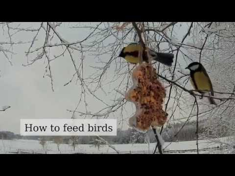 How to feed a birds in winter (nutritious, fat, seed - DIY bird feeder)