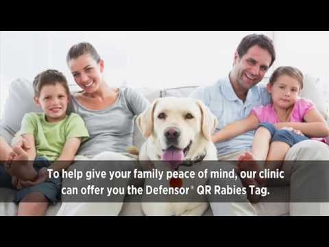 Lost Pets Tags Video