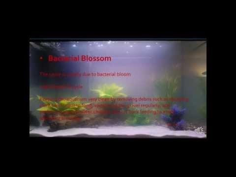 Reasons for cloudy water in aquarium HD
