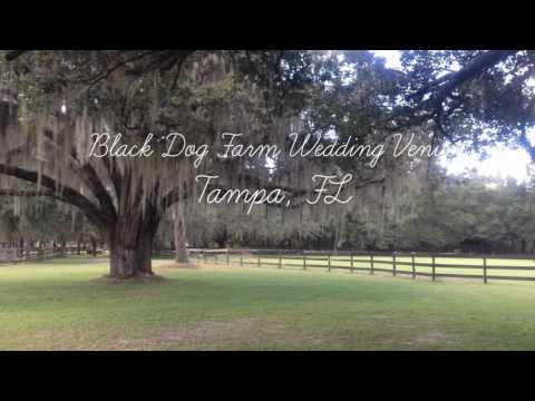 Black Dog Farm Wedding Venue Virtual Tour