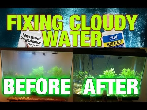 Cloudy Aquarium Water | Step by Step Fixing