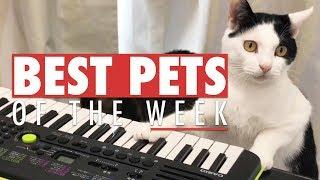 Best Pets of the Week   October 2017 Week 1