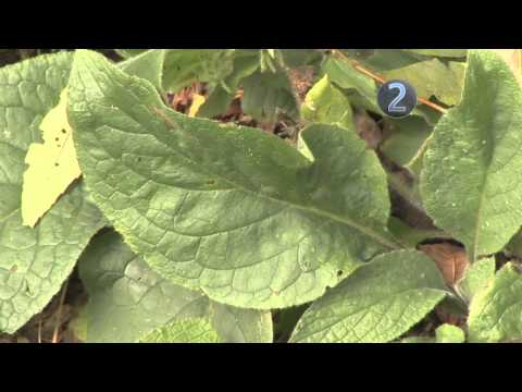 How to Control Lawn and Garden Weeds