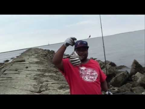 How to catch a lot of Sheepsheads with Fiddler Crabs