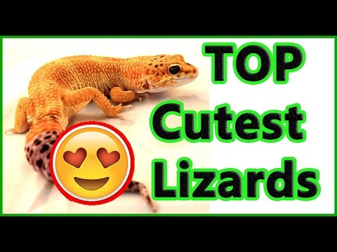 The Cutest Lizards Pictures