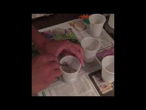 How to make dinosaur fossils - KS1