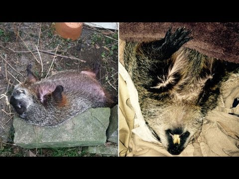 When A Family Found This Creature Dying In Their Yard, They Did Everything To Try And Save Her
