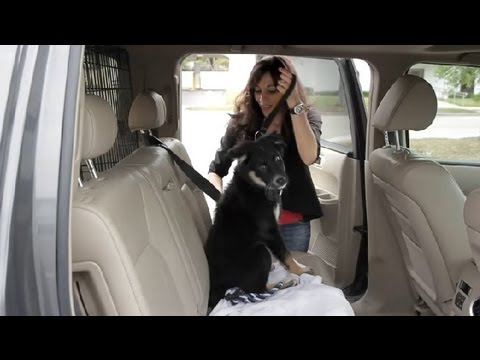 How to Make a Puppy Feel Secure in a Car : Dog & Puppy Care