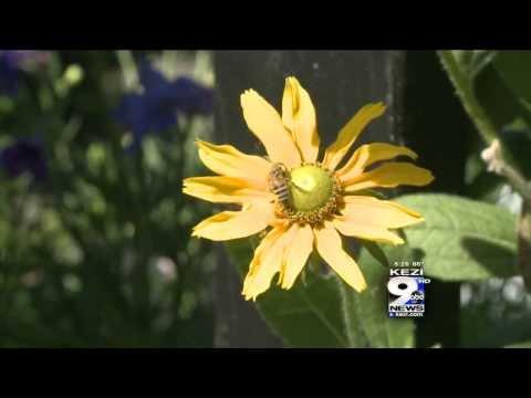 In the Garden: Attracting Bees