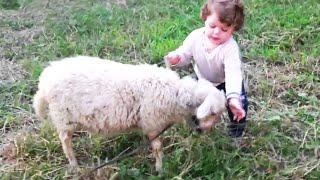 Risas de la Cuarentena 😂😂😂 El momento más divertido entre bebés y ovejas