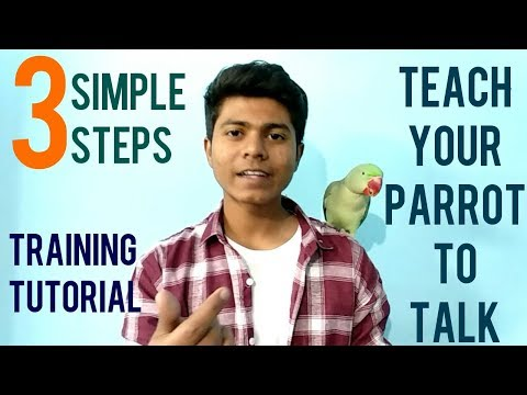 How To Train Parrot To Talk? | Training Tutorial | Teaching Alexanderine Parrot to Talk | (Hindi)