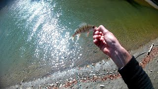 Perch fly fishing with streamer|Fly fishing for perch|Fly fishing Croatia