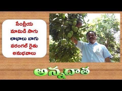 Profitable Organic Mango | by Warangal farmer || ETV Annadata