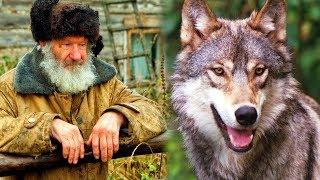 هذا العجوز أنقذ ذئبًا صغيرًا، وعندما كبر الذئب لن تصدق كيف رد المعروف للرجل