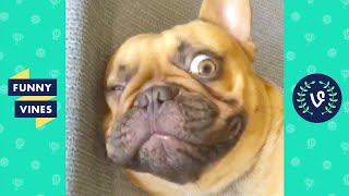 DOGS WINKS BACK 😉 | FUNNY ANIMALS