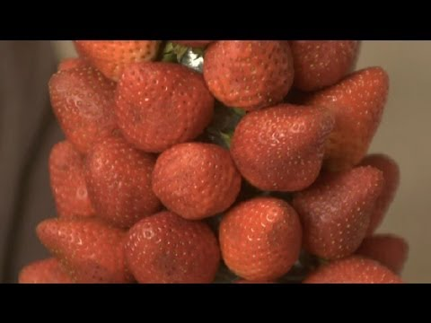 How to Make a Fruit Topiary for a Baby Shower With Strawberries : Practical Party Ideas