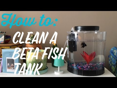 cleaning a 1 gallon beta fish tank