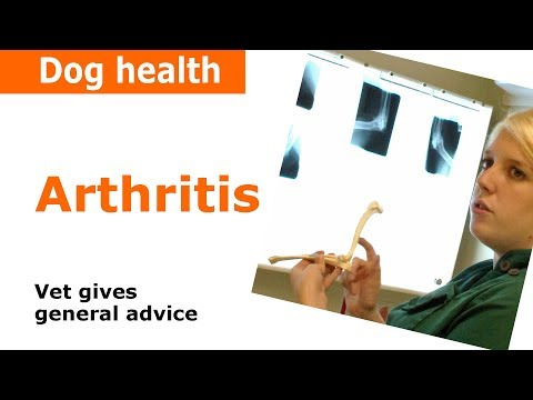 Arthritis in dogs - Vet Advice