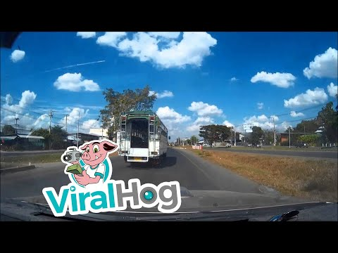 Garbage Bin Cover Flies Into Front Of Car || ViralHog