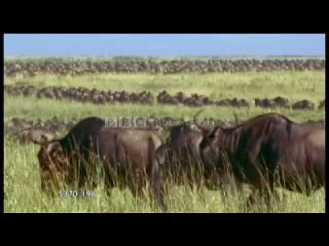 Extract BBC Motion Gallery - Wild Africa