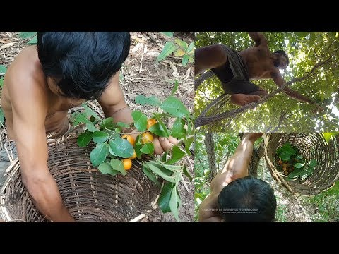 Primitive Technology, Pick up Fruit in The Forest