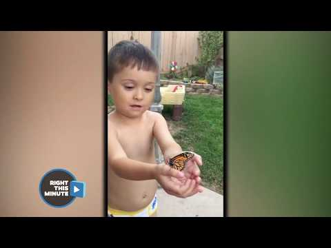 Baby Sister Tries to Eat Brother's Butterfly
