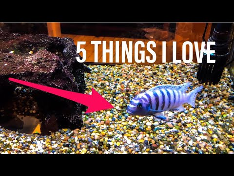 5 Things I Love About African Cichlids!