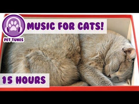 How To Relax My British Shorthair Cat! New Calming Music Has Helped Over 4 Million Pets-Pet Therapy