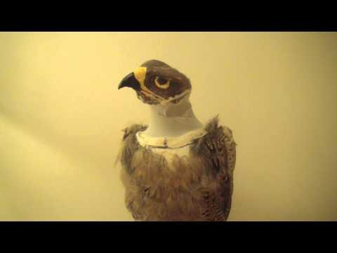 Animatronic Hawk Skin test