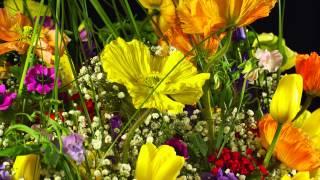 Amazing 4k flowers 3840x2160p (Testfootage, Demomaterial)