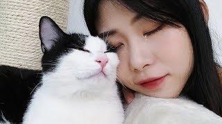 Download 【花花与三猫】铲屎官突然出差回家,开门的瞬间人和猫都哭了,场面非常感人! Video