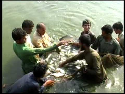 Nasir fish farm Rise oxygen Level to make lottery money.m2p