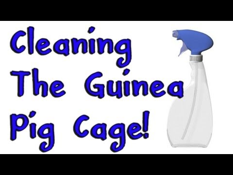 Cleaning A Guinea Pig Cage With Fleece
