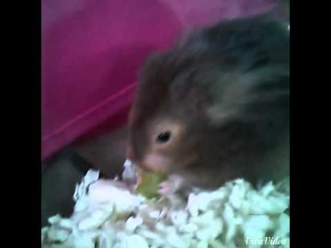 How to keep your hamster healthy