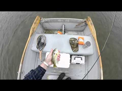 Fly fishing for spring bluegills - after the cold front