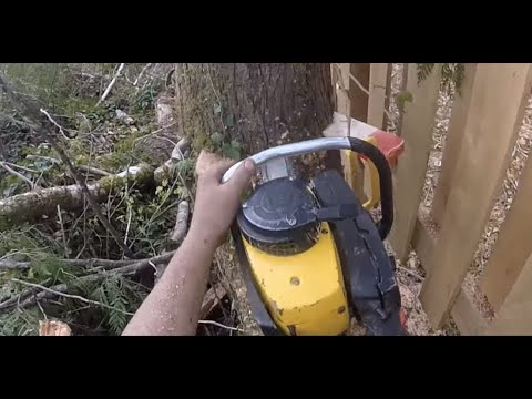 FALLING TIMBER WITH VINTAGE SUPER PRO  81 McCULLOCH