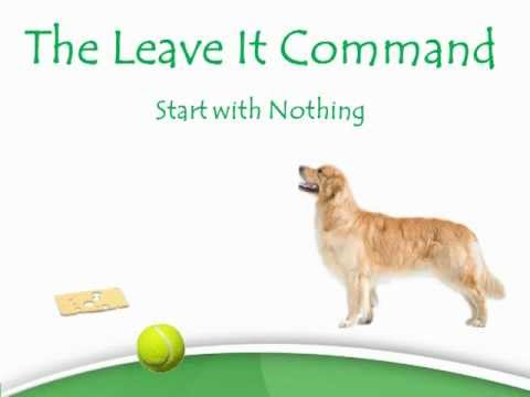 Dogs With Food Aggression - Use This Exercise To Fix It