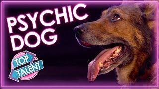 Top Police Dog Reads Judges Minds on Britain's Got Talent 2019 | All performances | Top Talent
