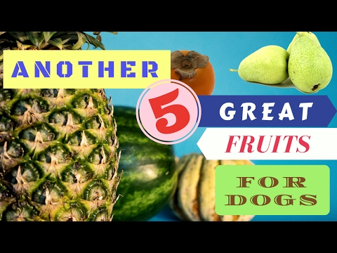 Another 5 Great Fruits for Dogs