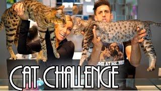 CRAZY CAT CHALLENGE!