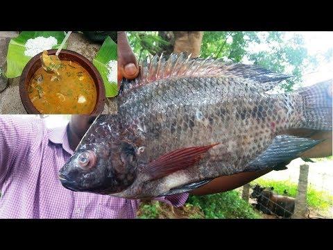 Village Style Tasty Fish Gravy Recipe // Amazing  Fish Curry Recipe - Food Money Food