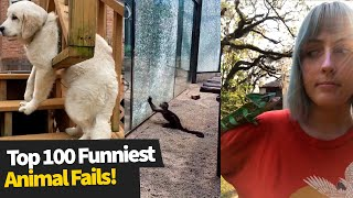 Top 100 ULTIMATE Funniest Animal Fails Compilation | Funny Pet Fails