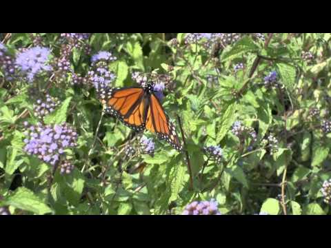 Norfolk Botanical Gardens 2