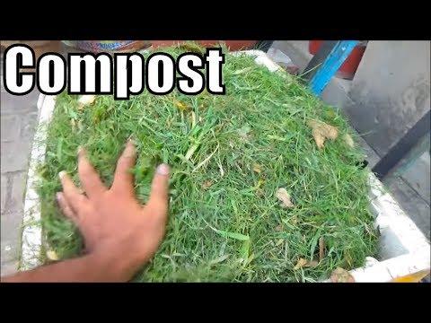 Grass Clippings Compost Vegetable Garden | Homemade Grass Fertilizer | Part-1 (Urdu/Hindi)