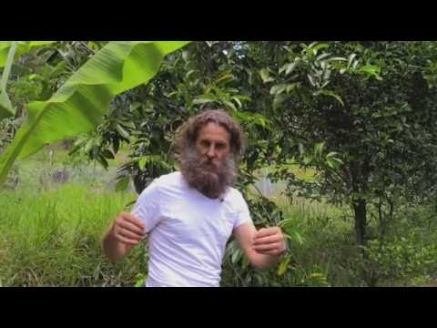 From Grasslands to Permaculture Food Forest Paradise in Noosa Australia Ian Trew