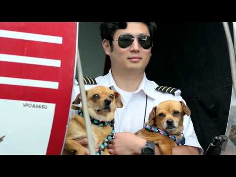 FreeKibble Flights to Freedom - 105 Shelter Pets Fly to Forever Homes
