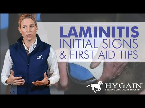 Laminitis – Recognizing Early Signs and First Aid Treatment