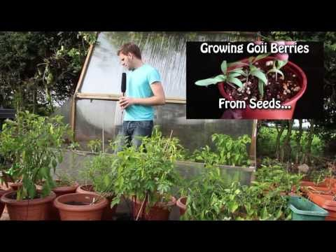 Garden Planning - Greenhouse, Meat Rabbits, Aquaponics, Chickens and more...