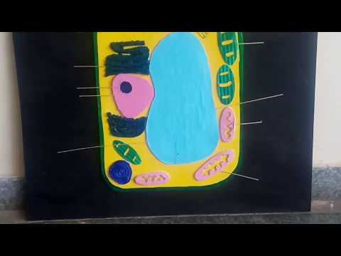 Plant cell - 3D model - School project
